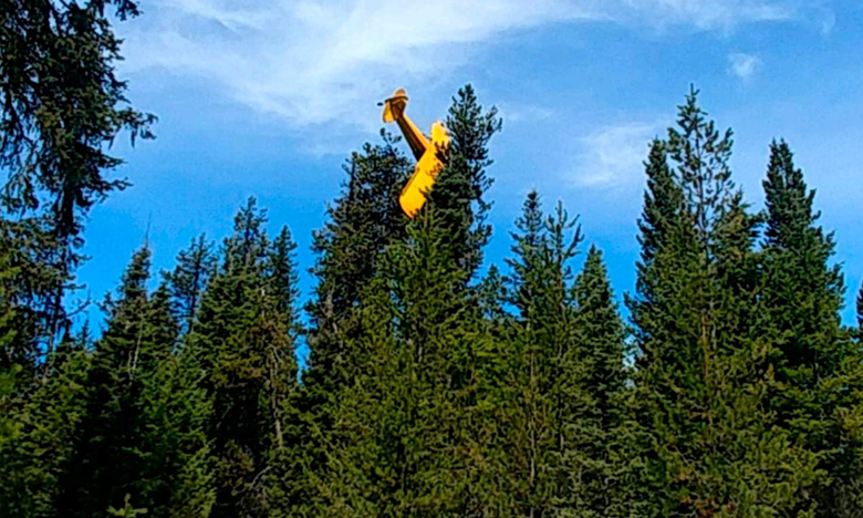 Pilot rescued from plane that crash-landed atop Idaho tree, చెట్టు చేసిన సాయం…ప్రాణాలతో బయటపడ్డ పైలట్