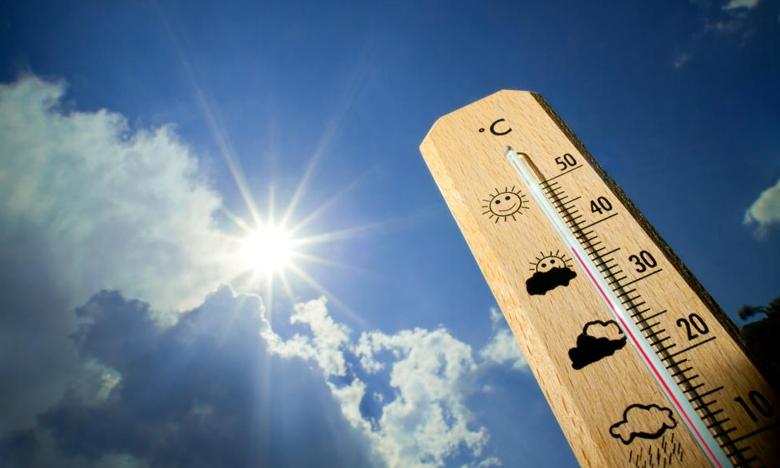 Summer Effect, ఎండదెబ్బకు పాములు.. విలవిల..