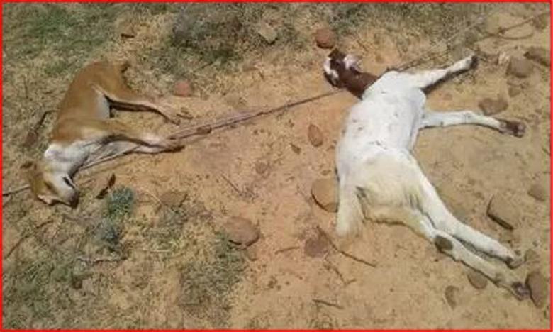 Stray dog dies after saving sheep and four shepherds from electrocution, కుక్కంటేనే విశ్వాసం..తాను చనిపోయి..జీవాలకు ప్రాణం పోసి