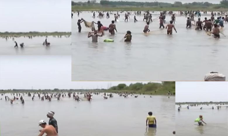 Villagers loot fish pond at Mahabubabad, బైక్ల మీద వచ్చి.. చేపల చెరువు లూటీ..