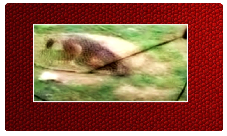Fox rescue, బావిలో పడ్డది కుక్క కాదు .. తీరా చూస్తే..!