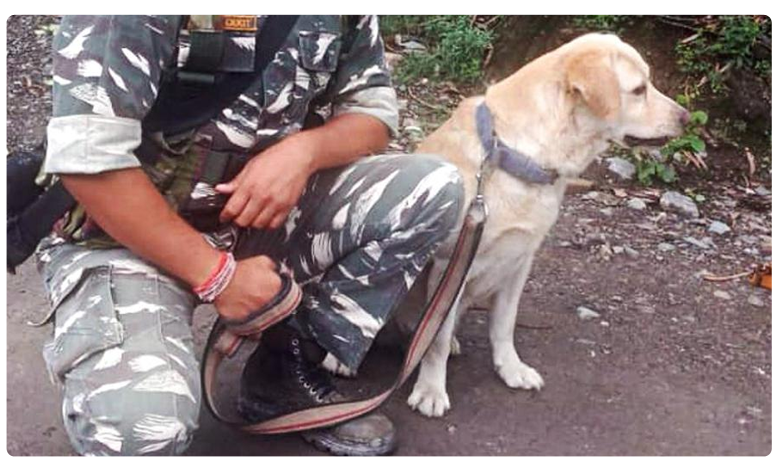 CRPF rescues man stuck in J&K landslide after police dog finds him, వావ్.. వాట్ ఏ డాగ్… అంతా హ్యాట్సాఫ్ చెప్పండి