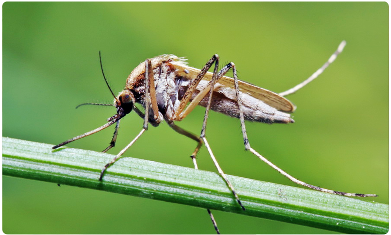 Mosquitoes have been almost Completely Wiped out on Two Chinese Islands, ఆ దేశంలో అసలు దోమలే ఉండవట..!