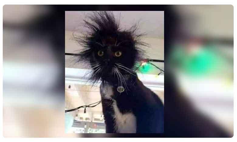 cat exploring a switchboard leave netizens in splits