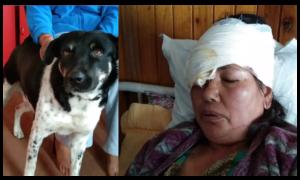 Dog saves human from leopard in Darjeeling, impresses people