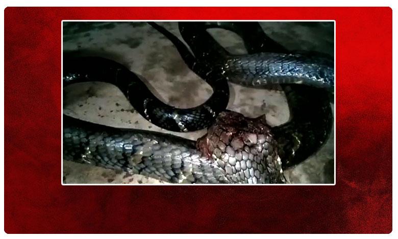 Snake caught in Agency