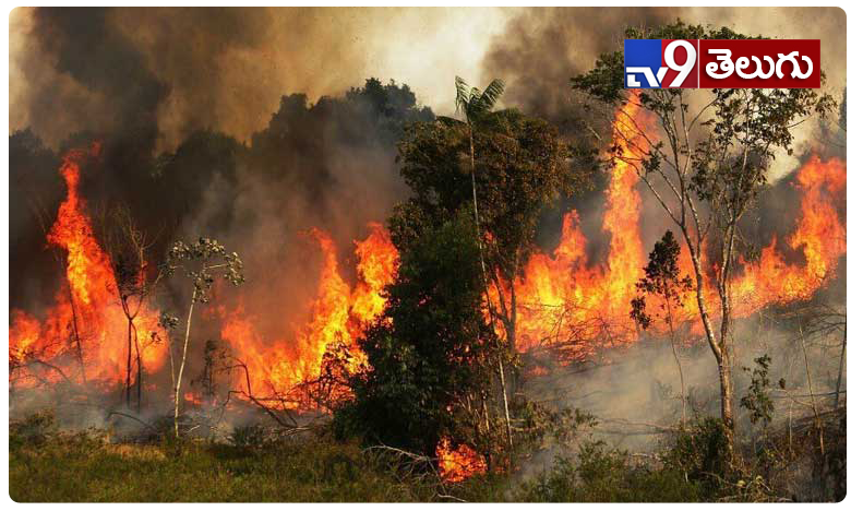 Fire Accident in Amazon Rain forest Photos