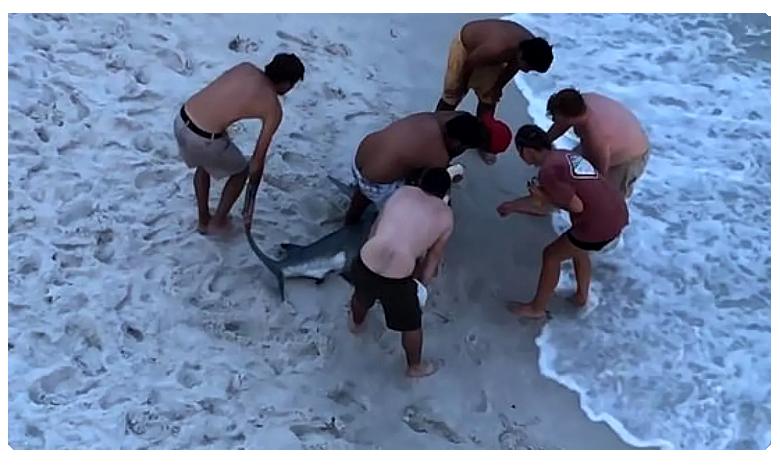 Shark Viral