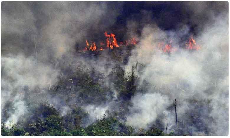 Amazon Rainforest Fire : బ్రెజిల్లో ఎమర్జెన్సీ.. అమెజాన్లో ఆగని కార్చిచ్చు