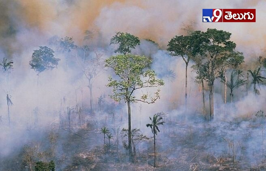 Fire Accident in Amazon Rain forest Photos, Amazon Rainforest Fire: తగలబడుతున్న అమెజాన్ ఫారెస్ట్..