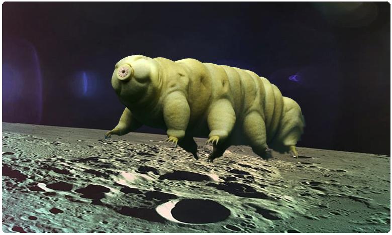 thousands of ultra resilent tartigrades (water bears) were left on the moon