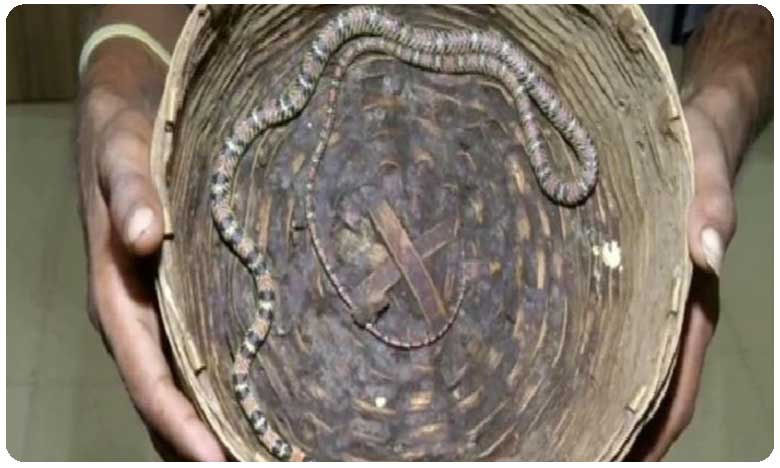 Rare Flying Snake Seized From Odisha Man