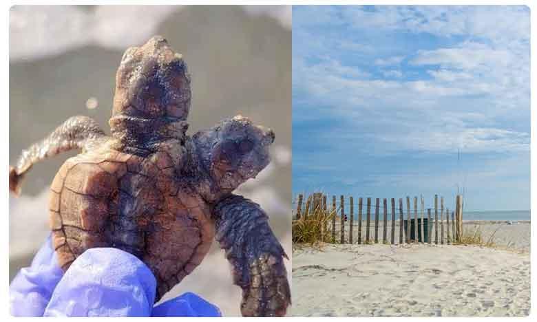 Two-Headed Turtle Hatchling Makes Big Splash In South Carolina
