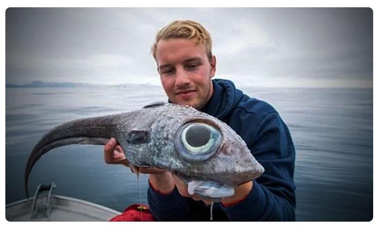 "Oscar Lundahl pictured with the strange looking ratfish., వామ్మో ! ' డైనోసార్ చేప !"" ఏ నాటి జాతిదో ?"