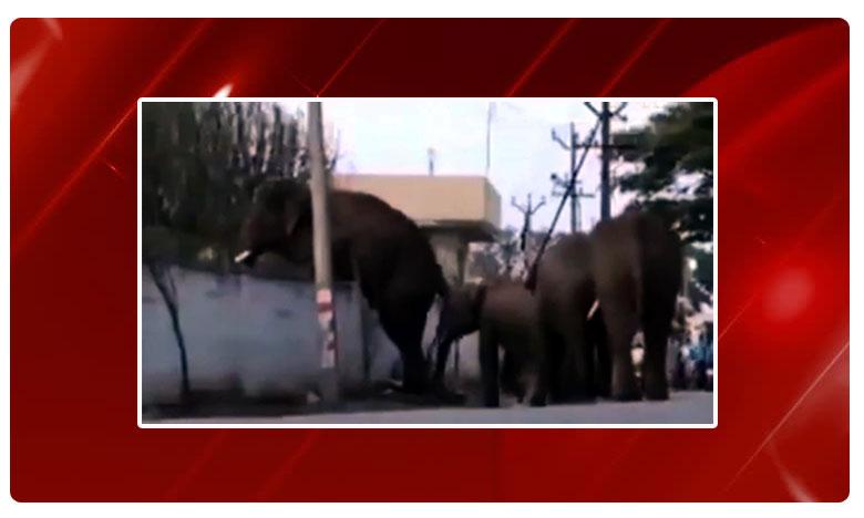A video of a herd of elephants has gone viral online and it shows the animals, ఏనుగు గోడ దూకేస్తే..ఏమవుతుంది..?