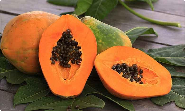 Papaya Leaves are best cure for Dengue Fever, డెంగ్యూ కాటుతో.. బంగారంలా మారిన బొప్పాయి..