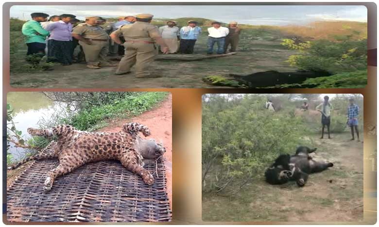 Suspicious deaths of animals in Kurnool district, అనుమానాస్పద స్థితిలో అడవి మృగాల మరణాలు..