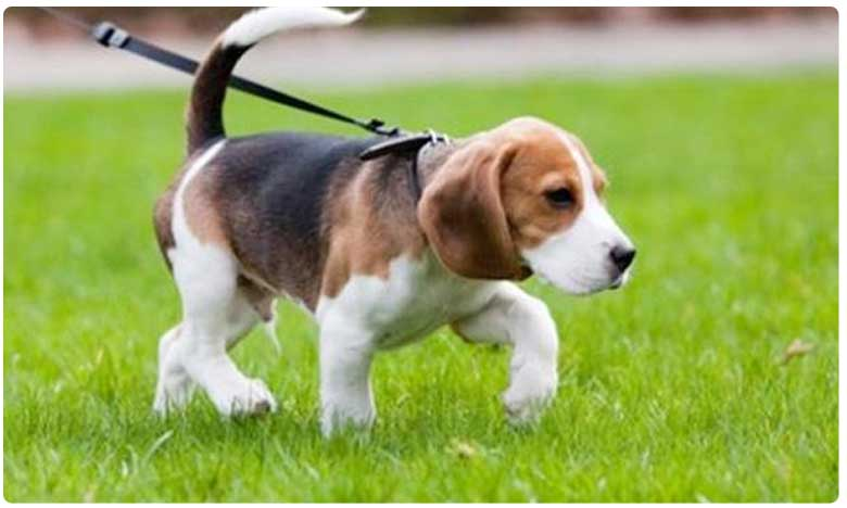 Veterinarian booked after Pet dog at CM KCR's residence dies, ప్రగతి భవన్లో శునకం మృతి.. వైద్యుడిపై కేసు నమోదు