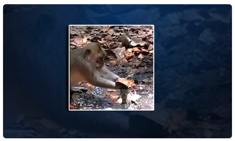 Monkey attempts to save water, ఆ కోతికి ఉన్న తెలివి కూడా మనకు లేదా..! వీడియో వైరల్