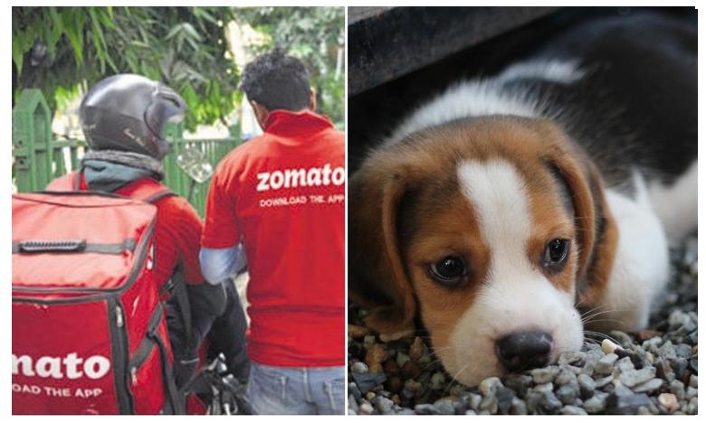 Zomato delivery man walks off with Pune woman's pet dog, డెలివరీ బాయ్ నిర్వాకం..పుడ్ ఇచ్చి..పెట్ డాగ్ని కిడ్నాప్ చేశాడు!