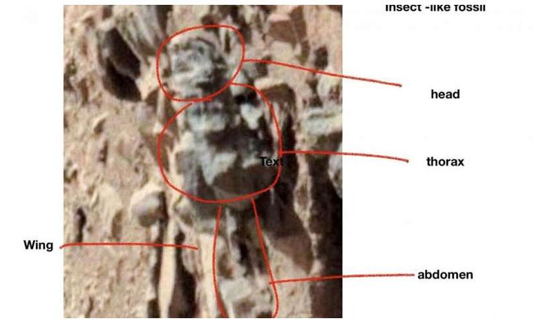 US Scientist Claims Photos Show Evidence Of Life On Mars, అంగారకుడిపై కీటకాలు..రోవర్స్ తీసిన ఫోటోలు..