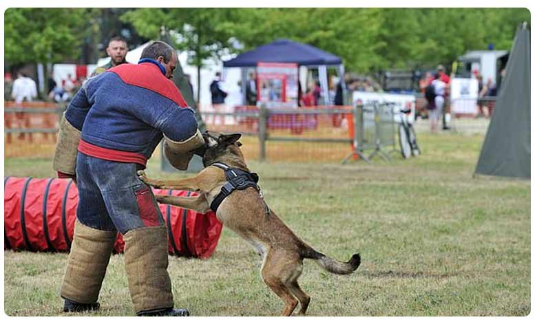 Army Dogs Kill 31-Year-Old Soldier, సైనికుడినే మట్టు పెట్టిన ఆర్మీ డాగ్స్!