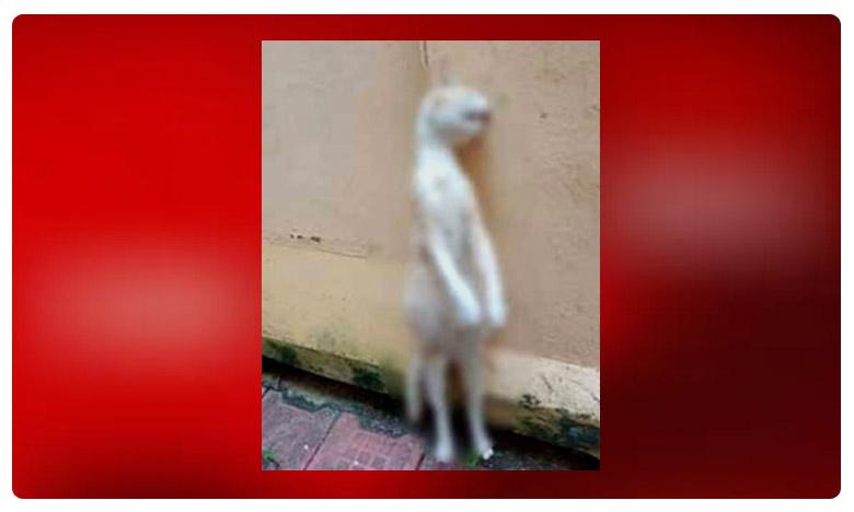 Pregnant cat found hanged to death in Kerala house, ఇంత క్రూరంగానా..!! గర్భంతో ఉన్న పిల్లిని ఉరితీసి.. ఆ తర్వాత..