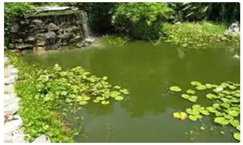 Two die after drowning in pond in visakhapatnam, తామరపూల కోసం వెళ్లి..అయ్యప్ప భక్తులు మృత్యువాత..