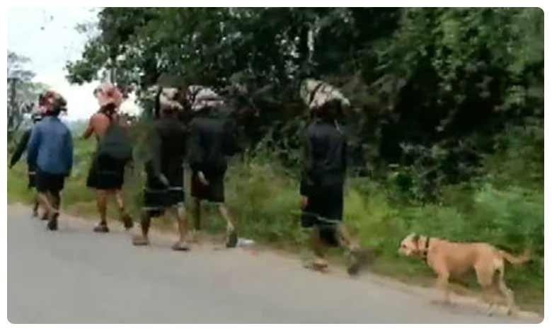 Stray dog walks over 480kms with 13 devotees to Sabarimala, అయ్యప్ప భక్తులతో… 480 కిలోమీటర్లు నడిచిన శునకం!