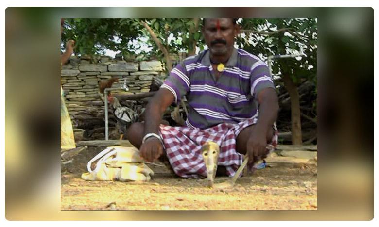 Specila story about snake catcher Anjaneyulu, అతనంటే పాములకు ఎంతిష్టమో తెలుసా..?
