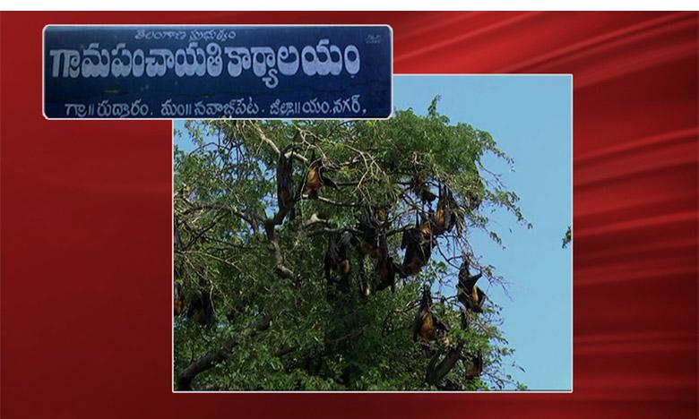 Bats Play Crucial Role in this Village, వందేళ్లుగా గబ్బిలాలతోనే సావాసం