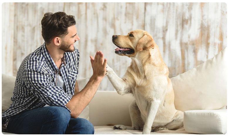 Health Benefits Of Breeding A Dog, కుక్కను పెంచుతున్నారా.. అయితే మీకో గుడ్ న్యూస్!