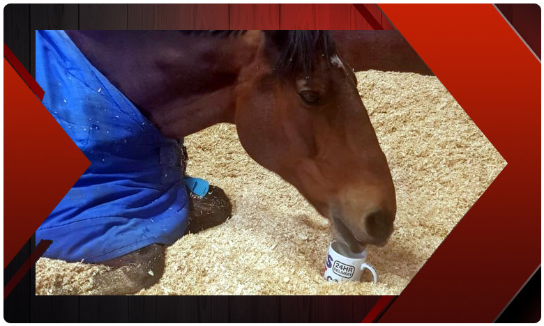 This Pampered Police Horse Refuses To Work Without His Cup Of Morning Tea, ఉదయాన్నే కప్పు టీ పడందే కాలు కదపని గుర్రం..!