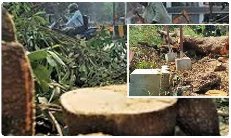 Farmer Carries Petrol bottle in Siricilla District, ఎమ్మార్వో ఆఫీస్కు వెళ్లిన రైతు..చేతిలో పెట్రోల్ డబ్బా !