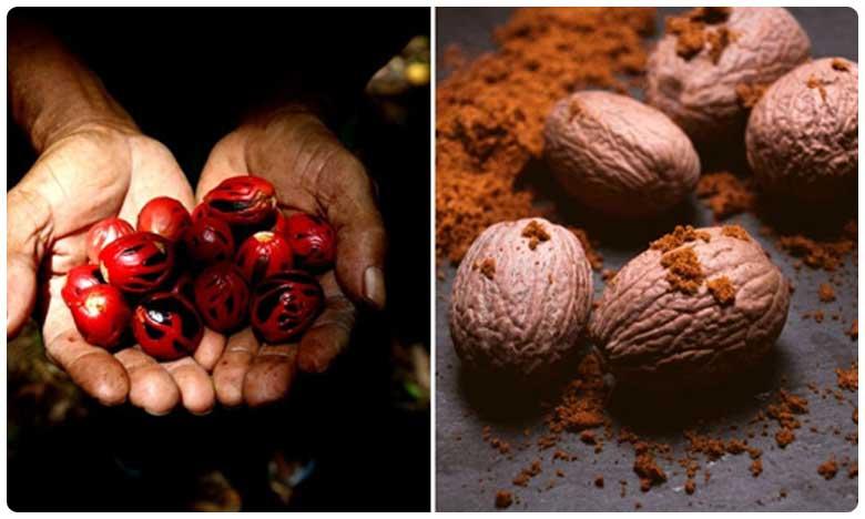 Nutmeg contains many essential volatile oils, జాజికాయ పొడితో.. అద్భుత లాభాలు!