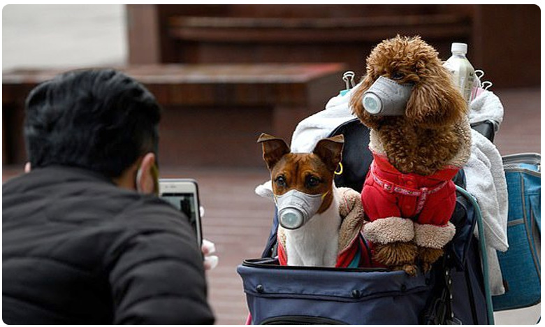Dog in Hong Kong has tested positive for coronavirus, షాకింగ్.. కుక్క పిల్లలకు కూడా కరోనా..!